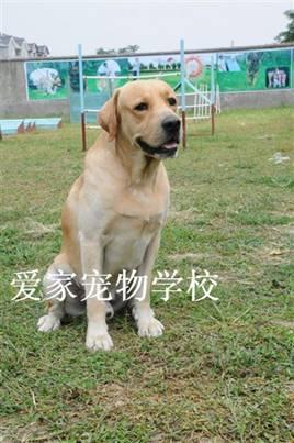 上海宠物培训学校