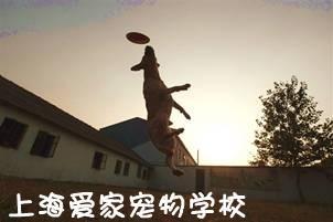 上海宠物训练学校