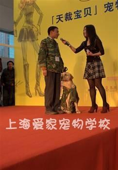 上海训犬学校