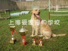 上海狗狗学校