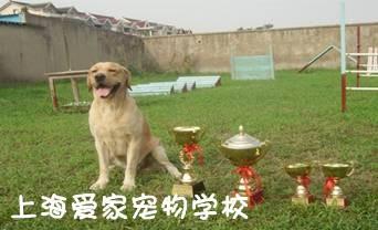 上海训狗学校