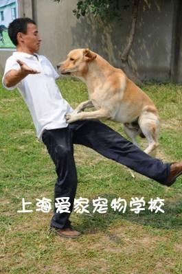 上海宠物学校