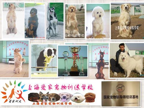 宠物培训学校 上海爱家宠物培训学校