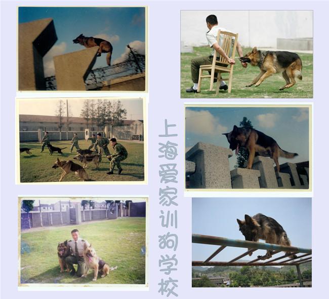 上海训犬学校 上海爱家训犬学校