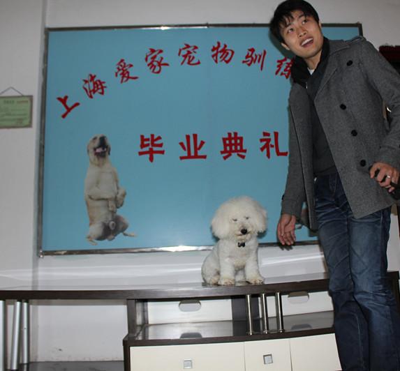 上海爱家狗狗培训学校